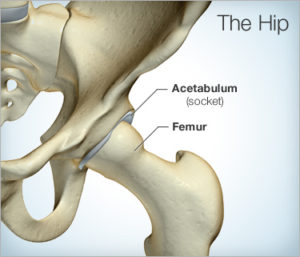 Hip joint of left hip